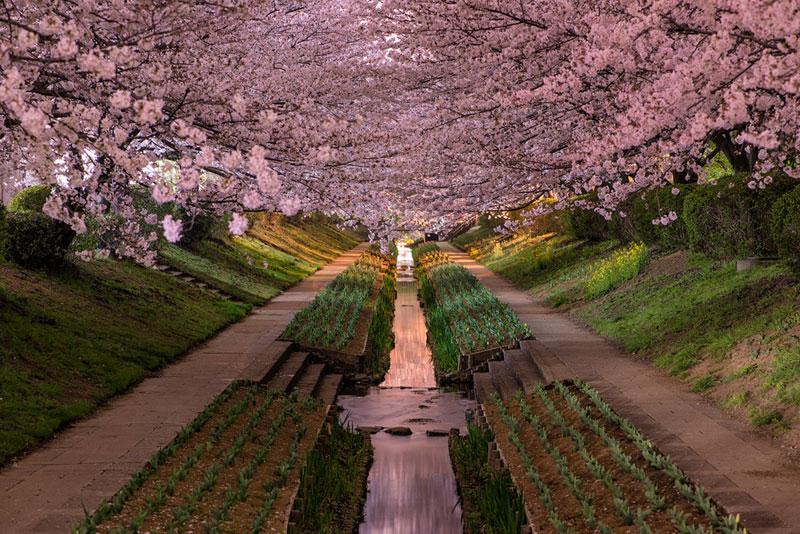 Bourgeons de cerisier dans le jardin botanique de Yokohama. - See more at: http://voyagerloin.com/actualite/75-photos-du-monde-lavez-jamais-vu/#sthash.DpnVxRud.dpuf