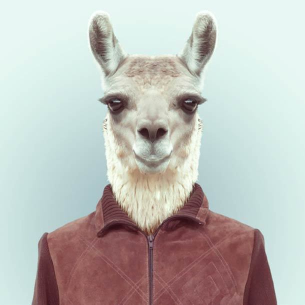 Zoo-Portraits-helloodesigner