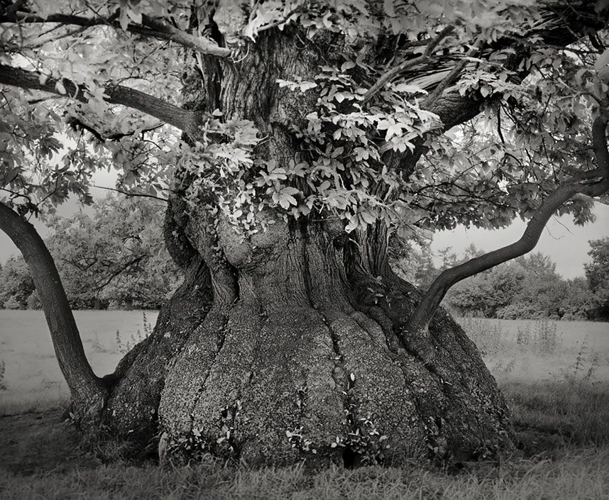 photographie-ancien-arbre-art-photographe