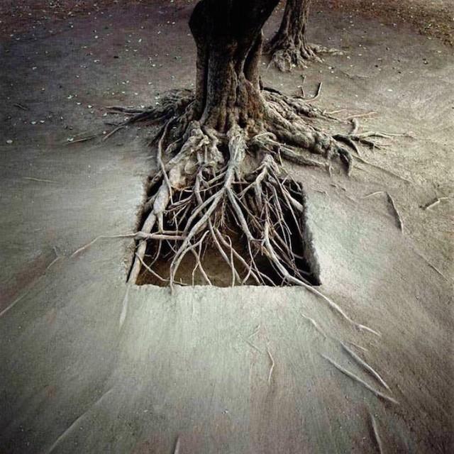 The-Beauty-of-Nature-photographie-art-peinture